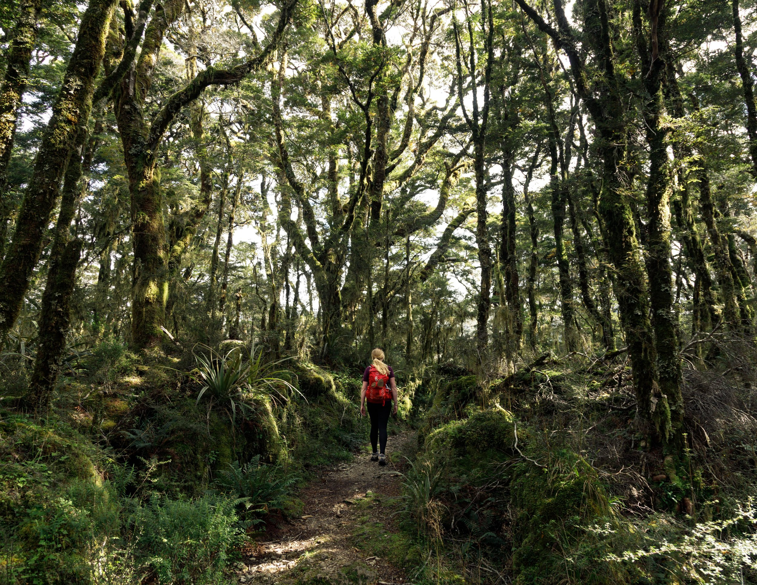 Forest on day two of the Heaphy Track
