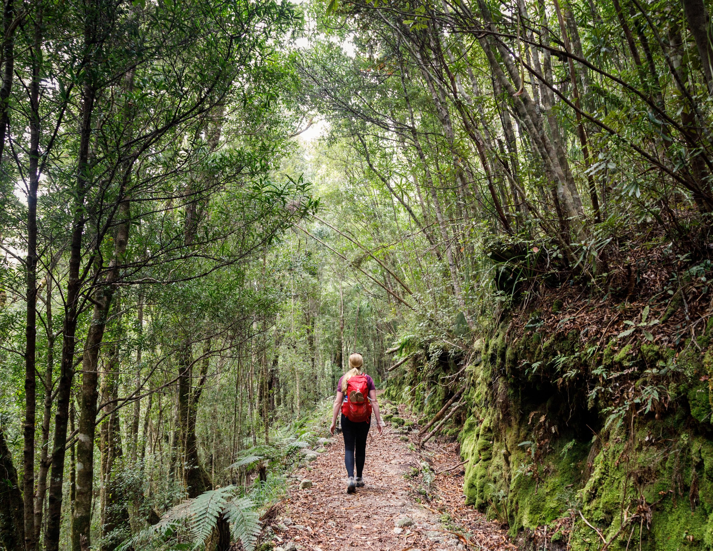 Day three on the Heaphy Track