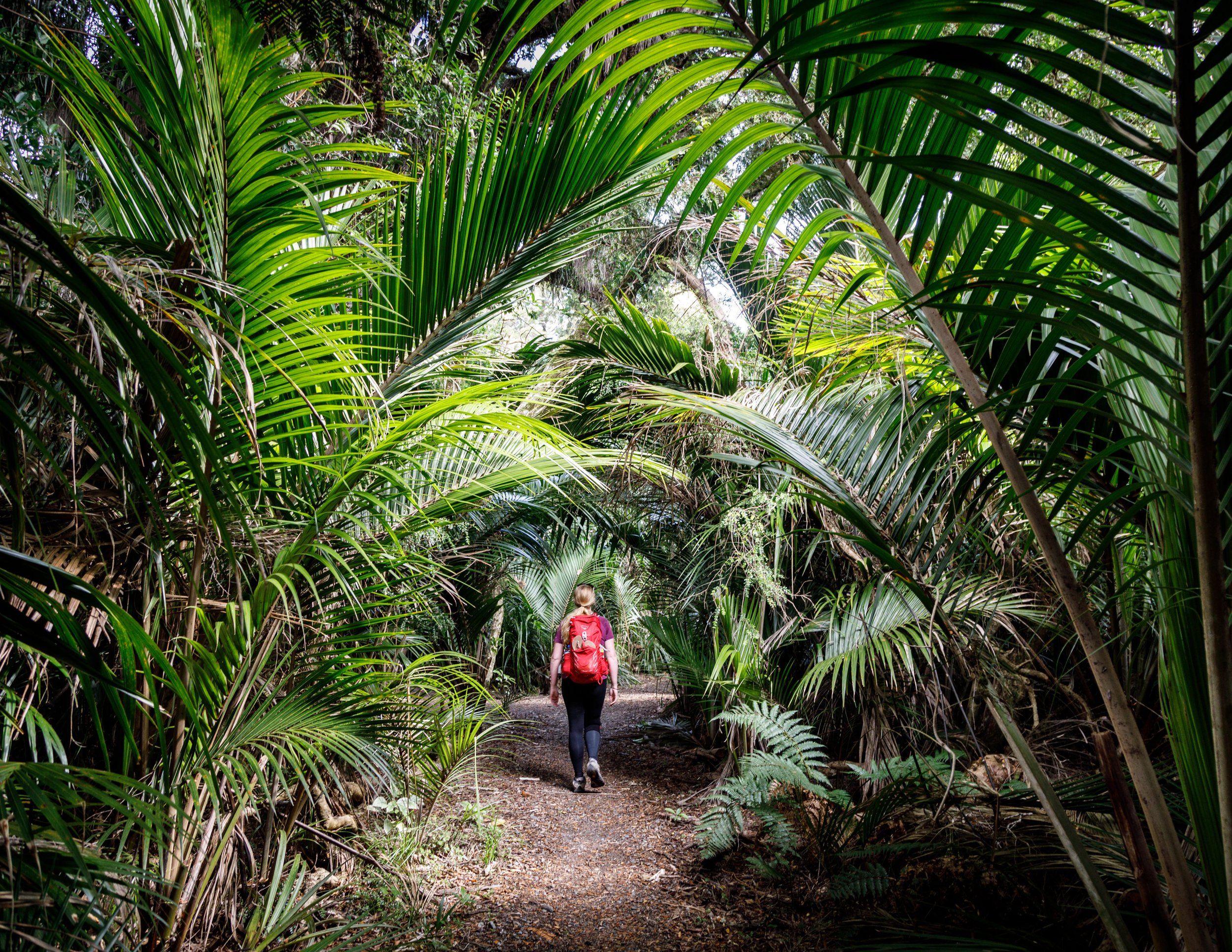 Tropical palms on the Heaphy Track