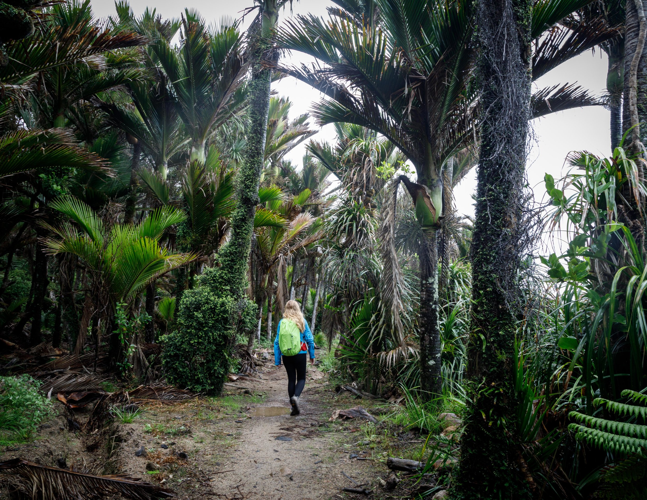 Last day of the Heaphy Track