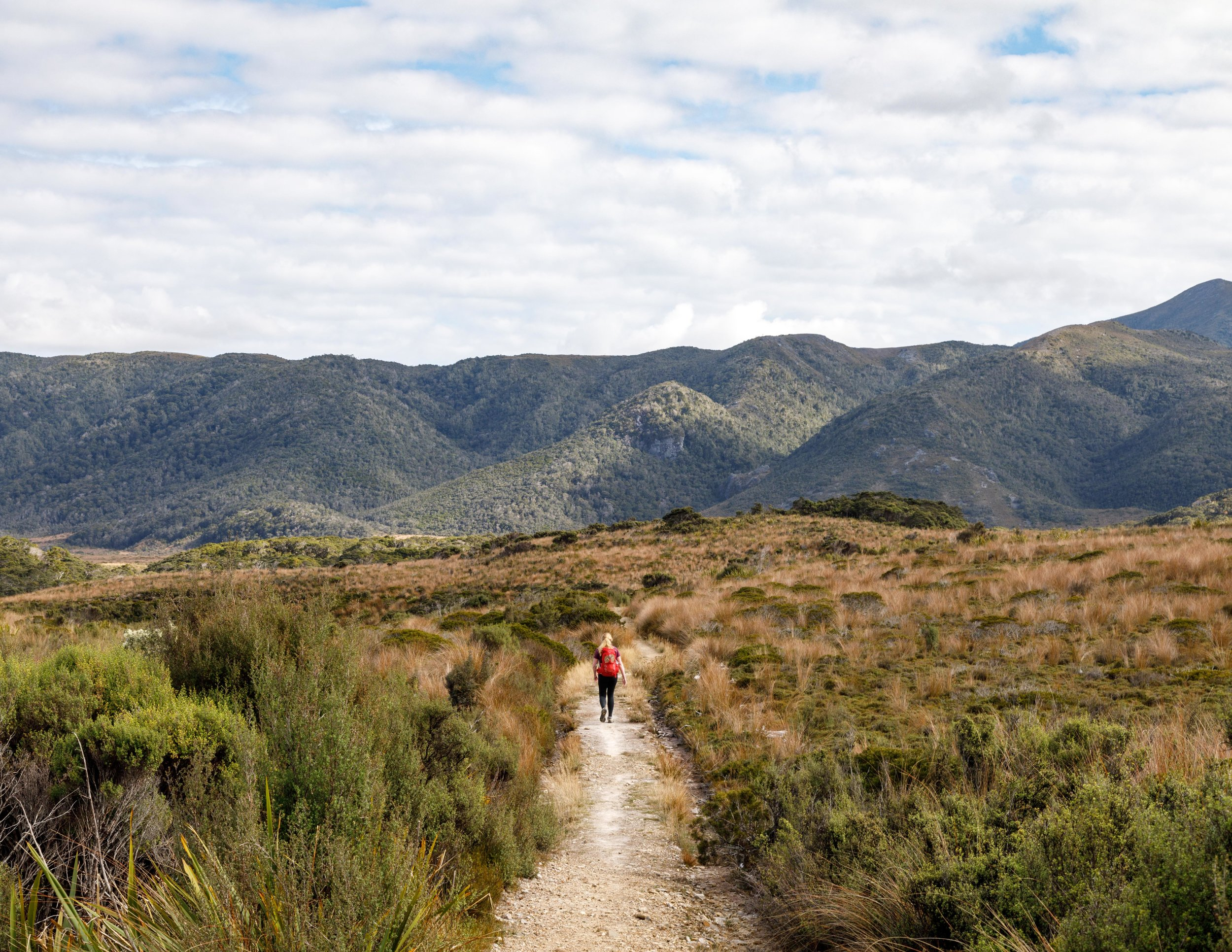 Heaphy Track Booking