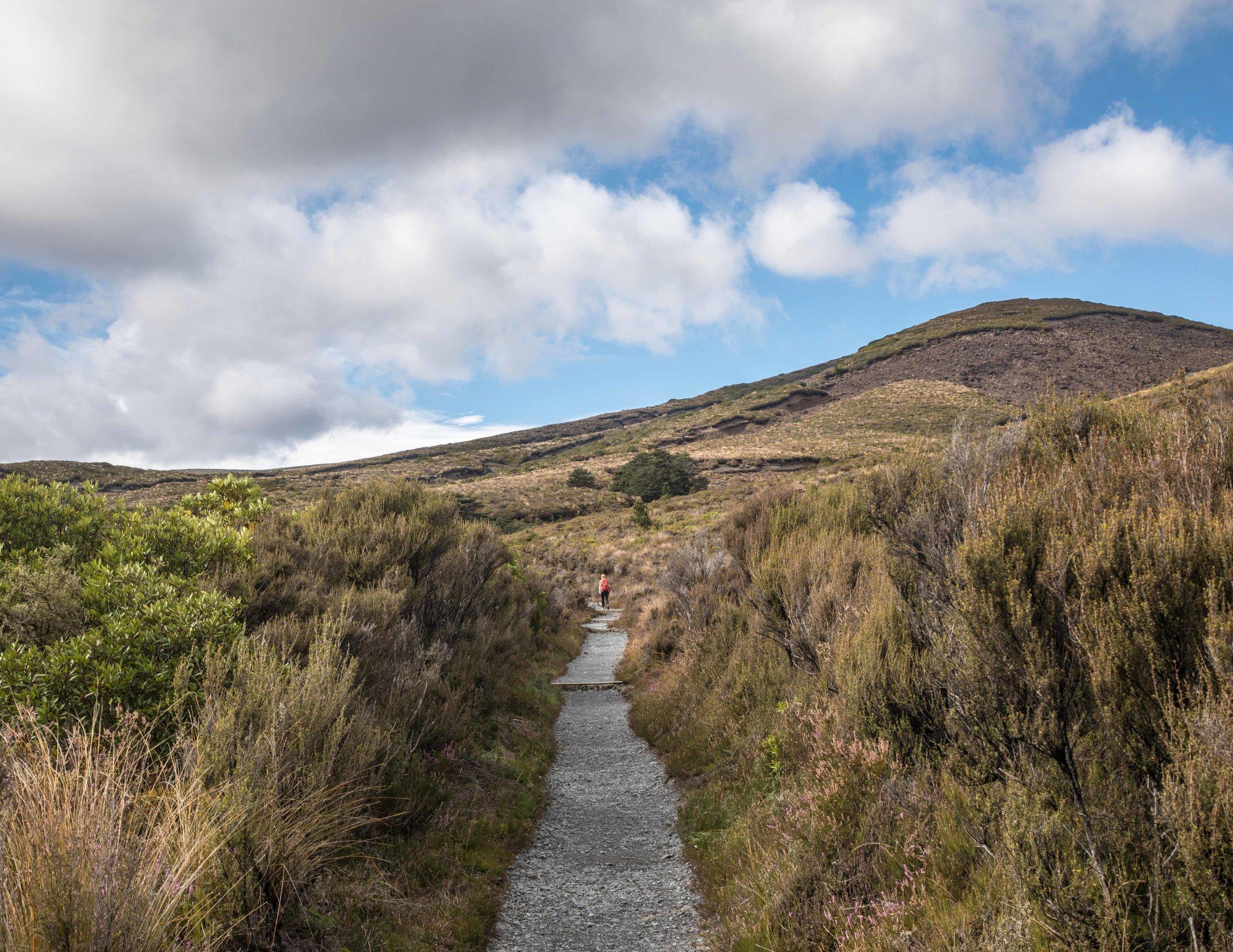 The path to Waihohonu Hut