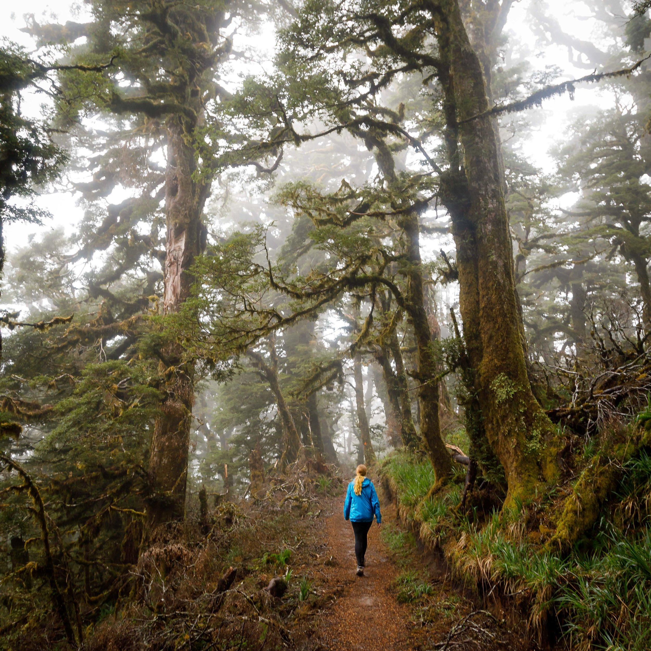 Misty forests on the Lake Waikaremoana Track