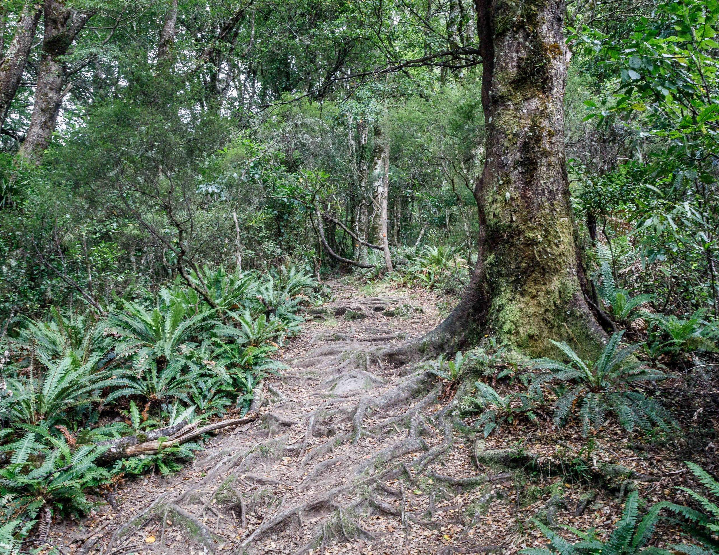 The Lake Waikaremoana Track: Onepoto - Panekire