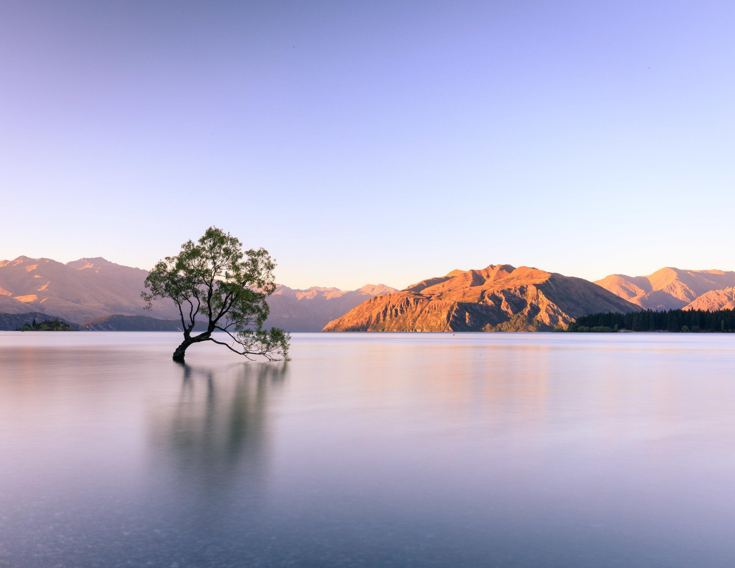 The Waanaka Tree: Best of New Zealand