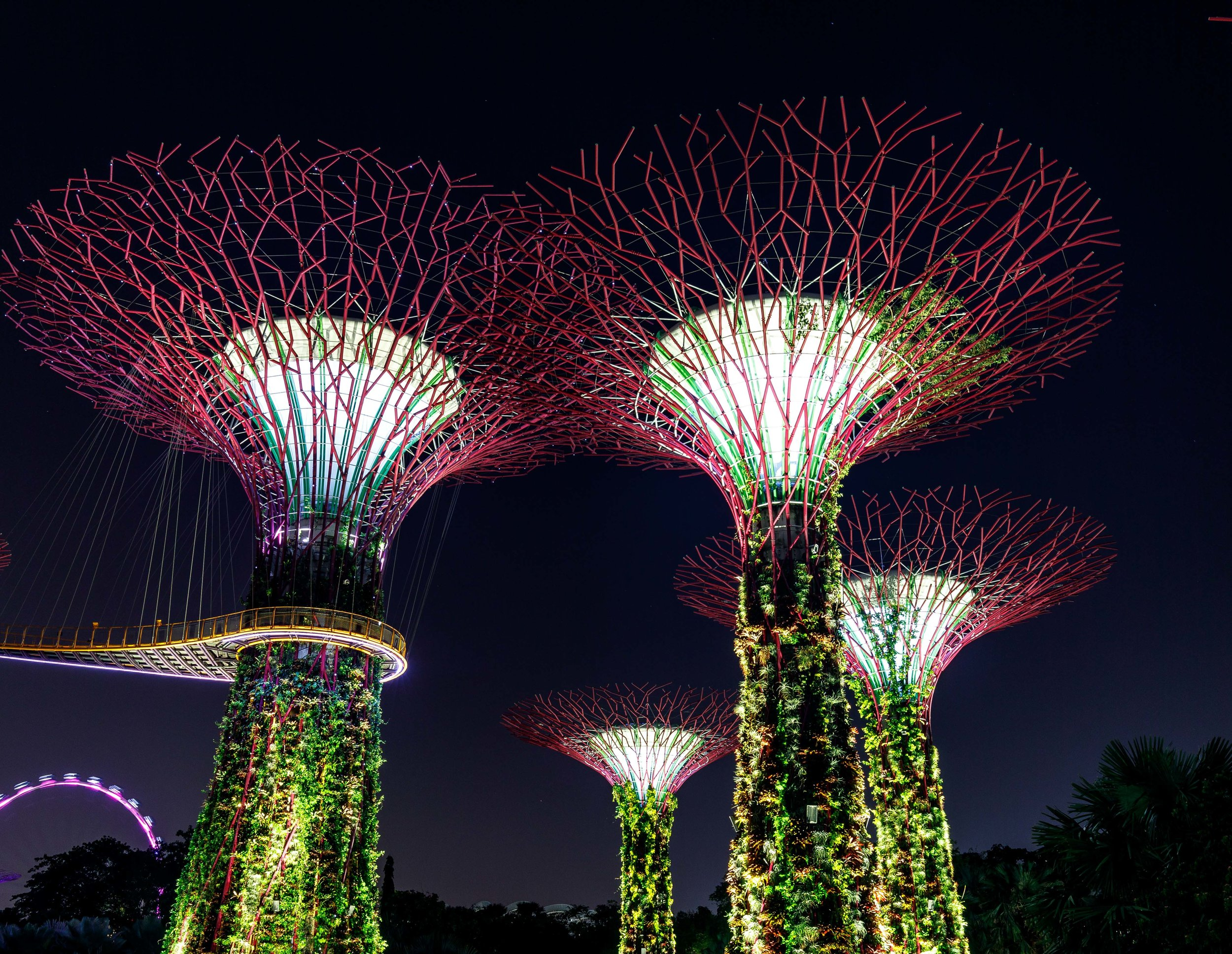 The super trees at Gardens by the Bay - Singapore