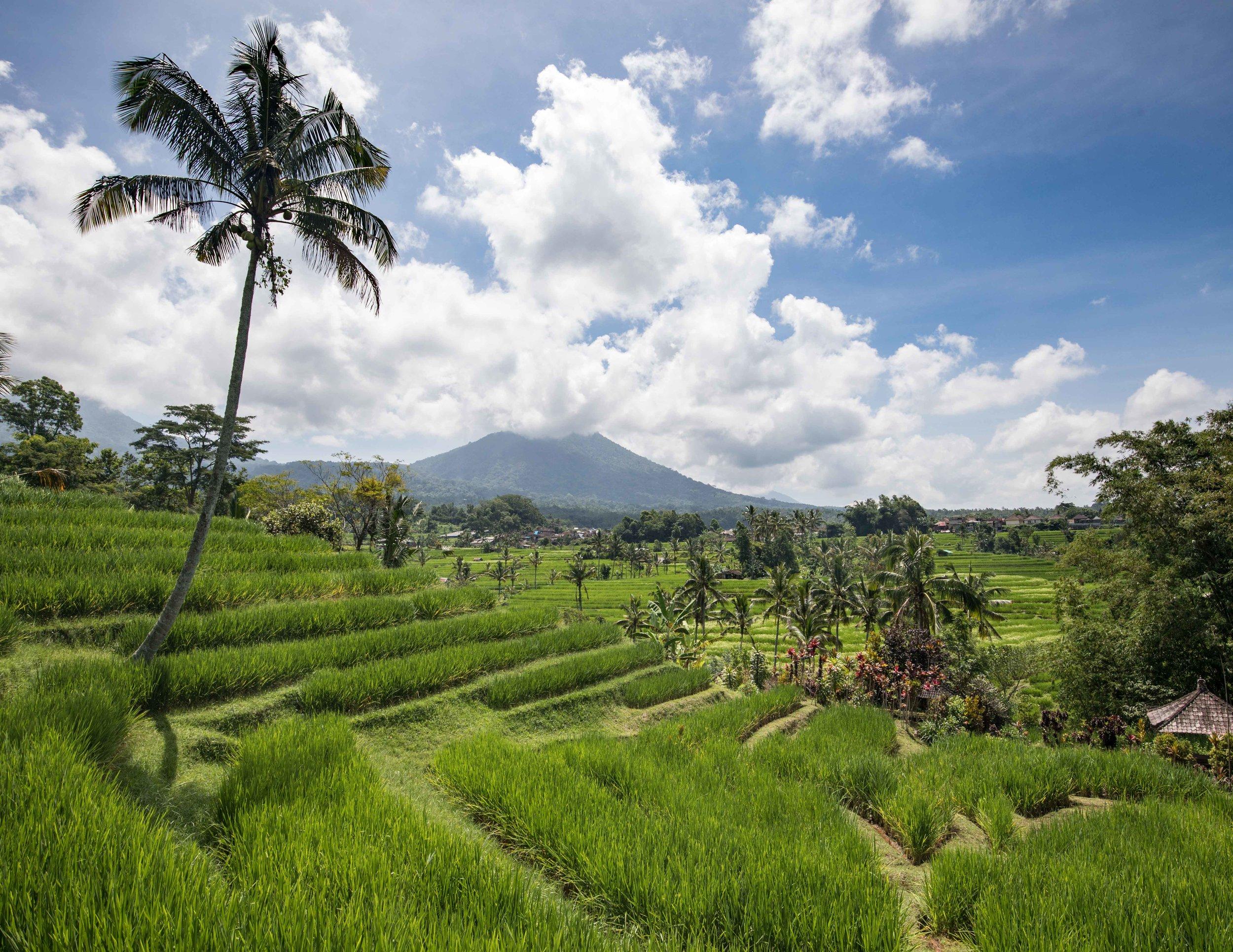 Jatiluwih Rice Terrace Entrance Fee