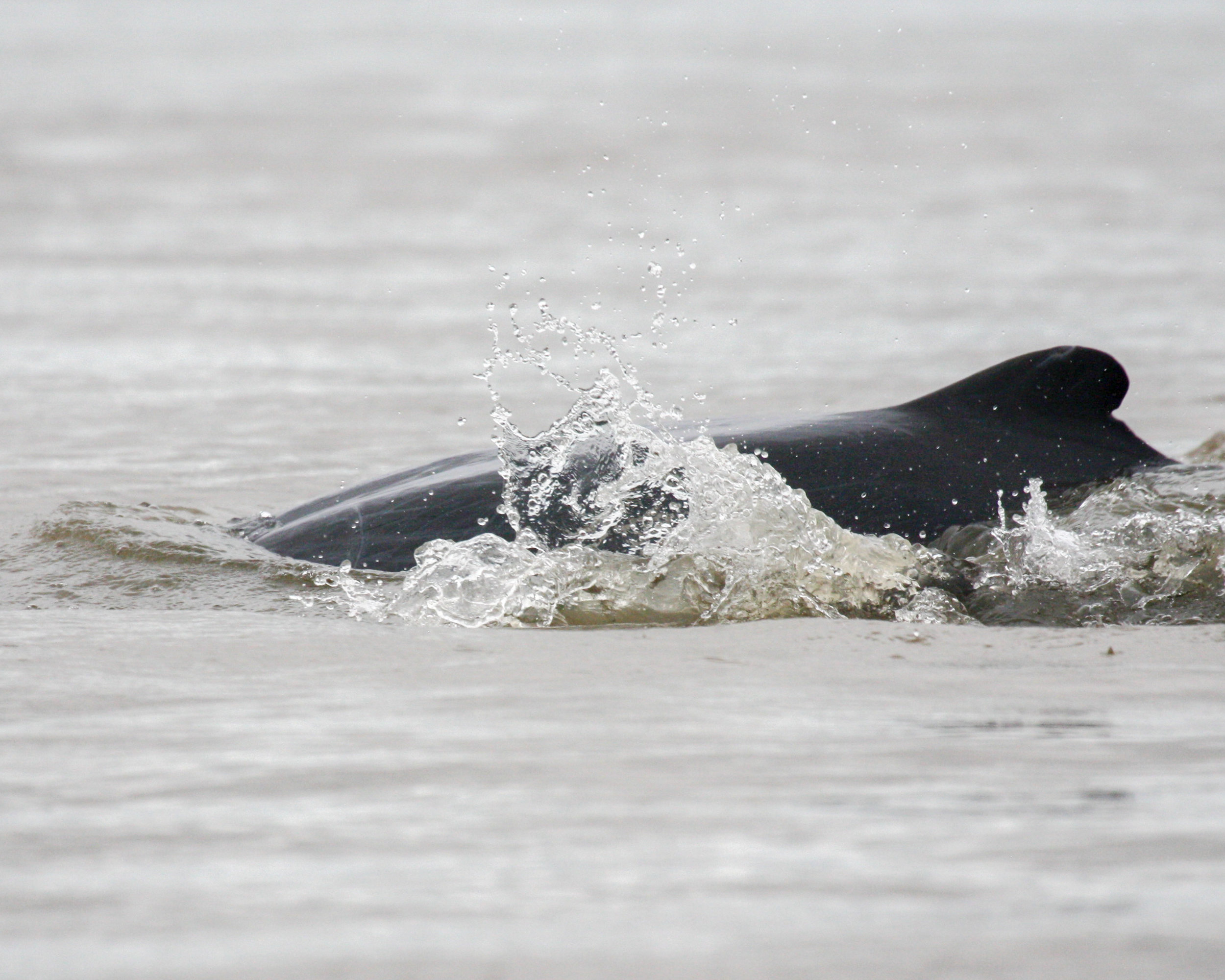 Cambodia Itinerary: Irrawaddy River Dolphins