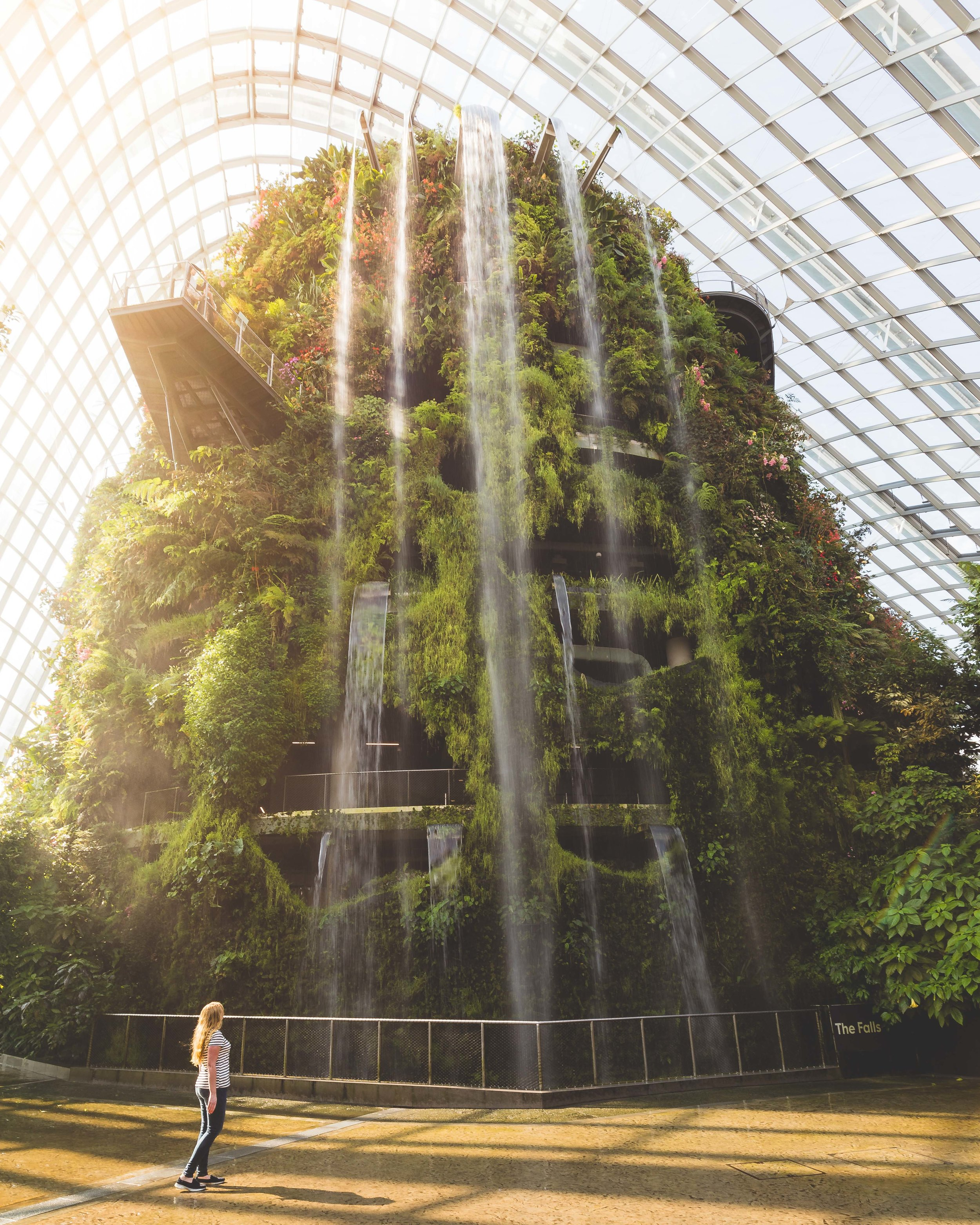 Best things to do in Singapore: the Cloud Forest