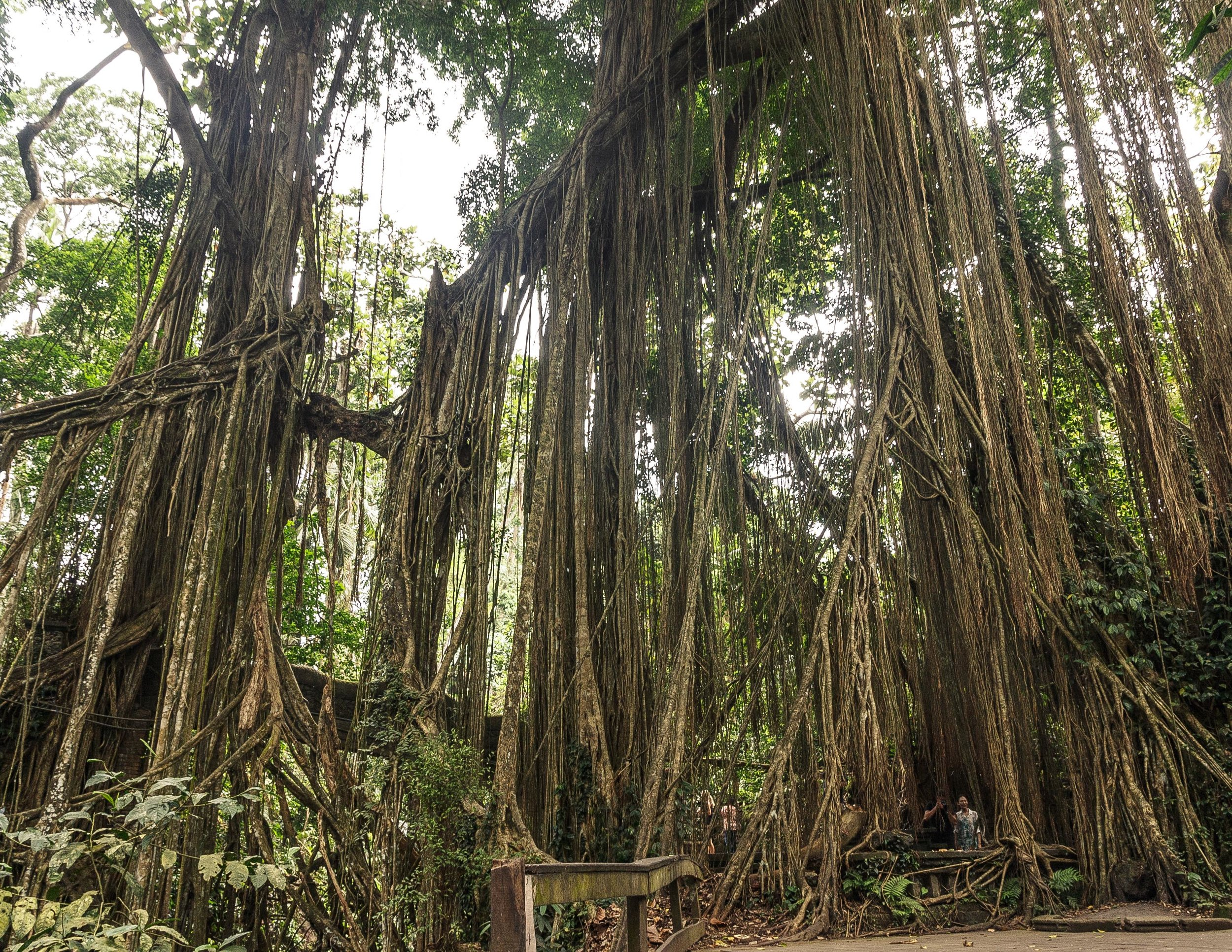 Bali Itinerary for 7 days: Sacred Monkey Forest