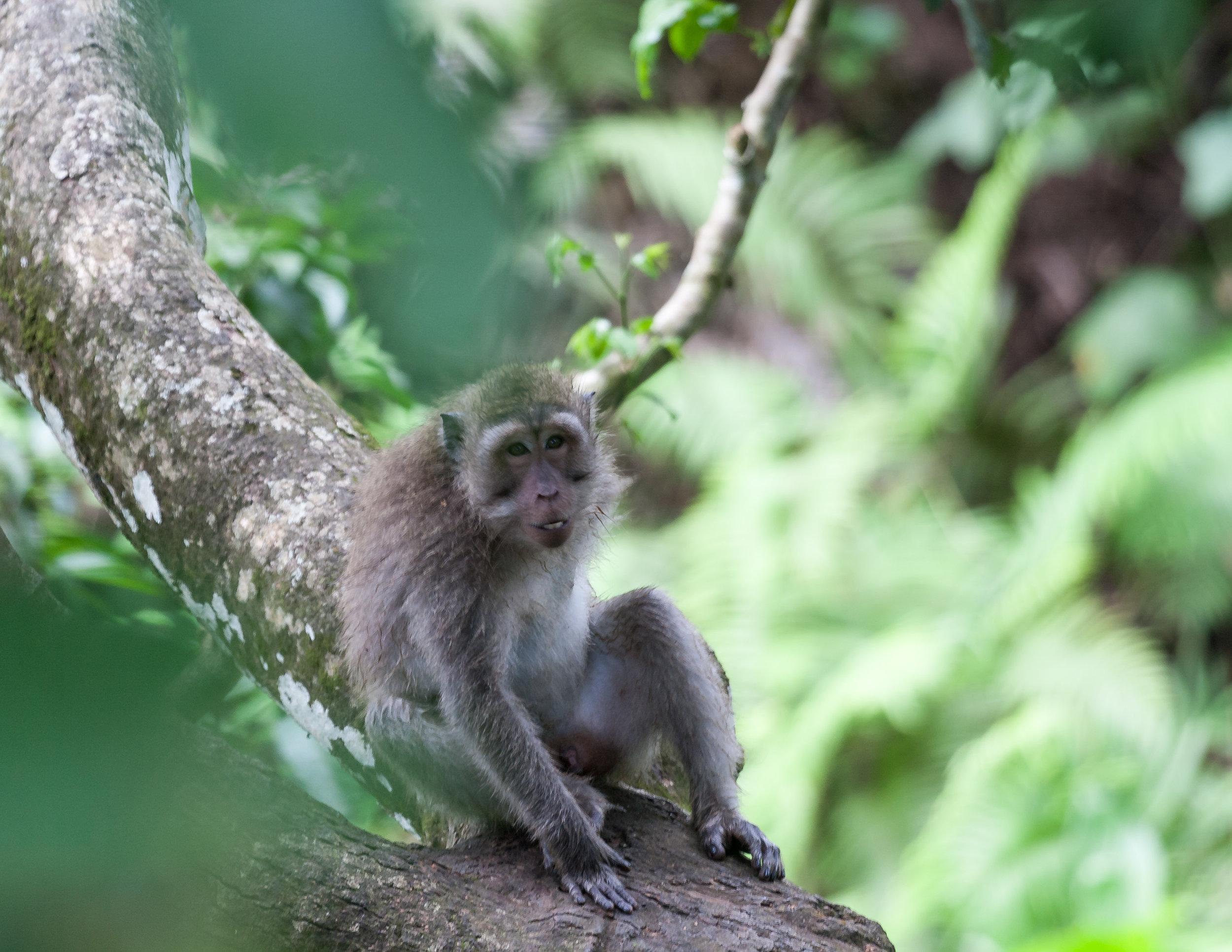 Bali Itinerary 7 days: Sacred Monkey Forest