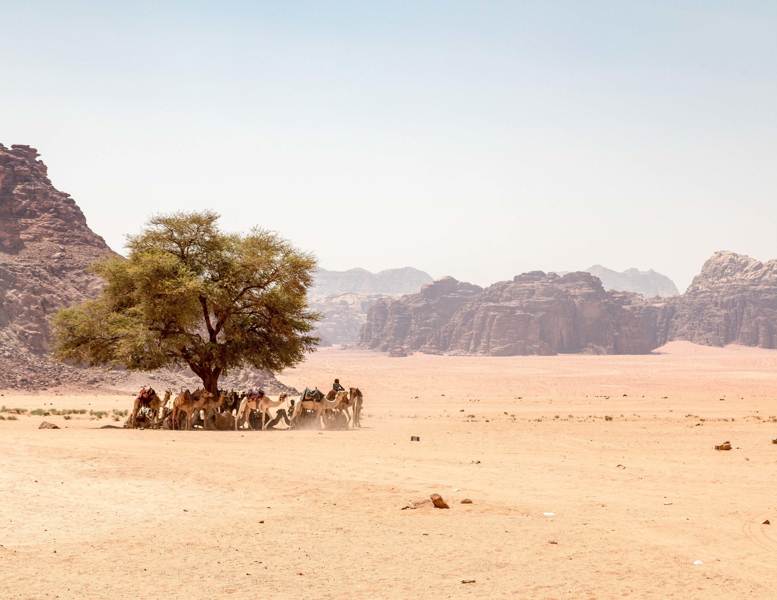 Wadi Rum: Lawrence Spring
