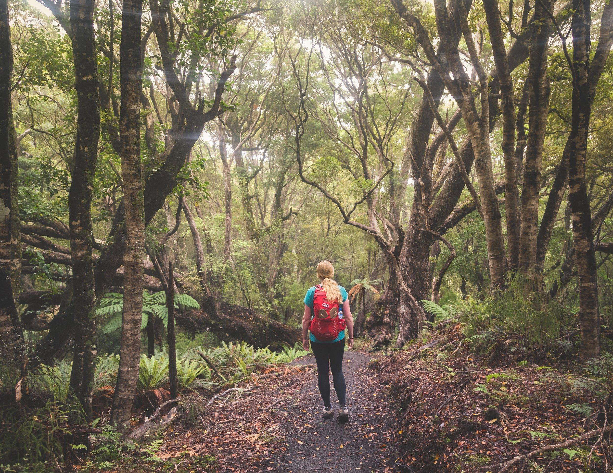 The easiest Great Walk of New Zealand: The Rakiura