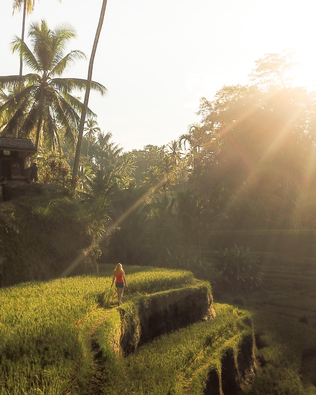 Bali Itinerary 7 days: Tegalalang