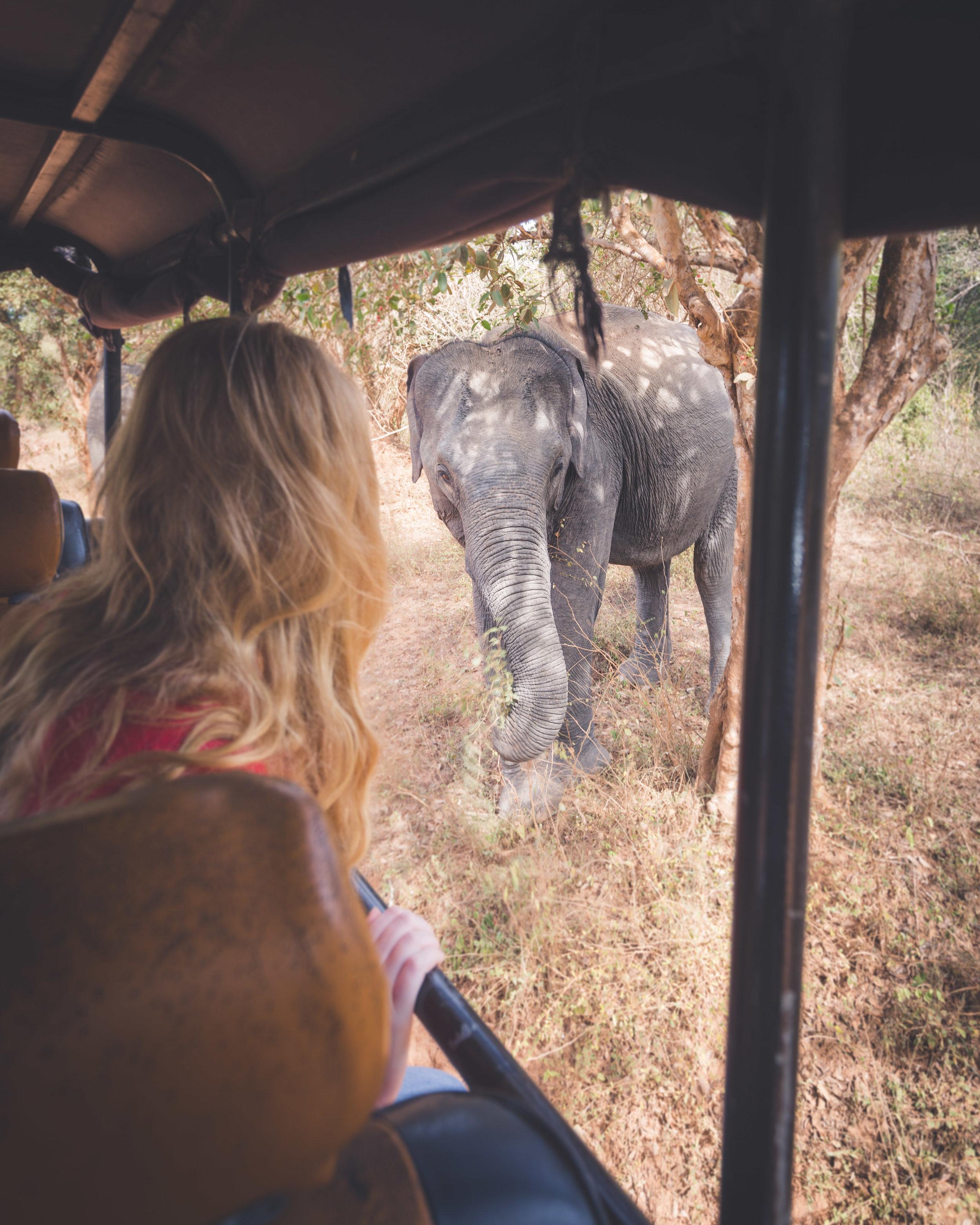 Is a full day Yala Safari Worth it: elephants