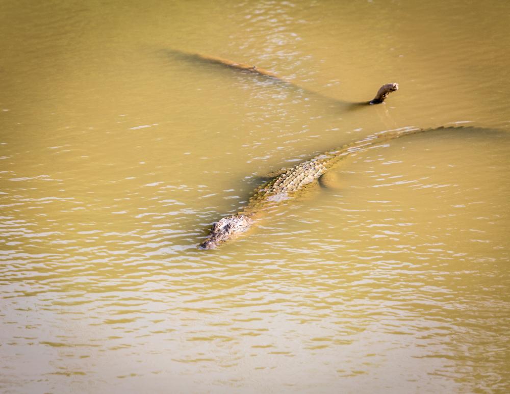 Best time to visit Yala National Park