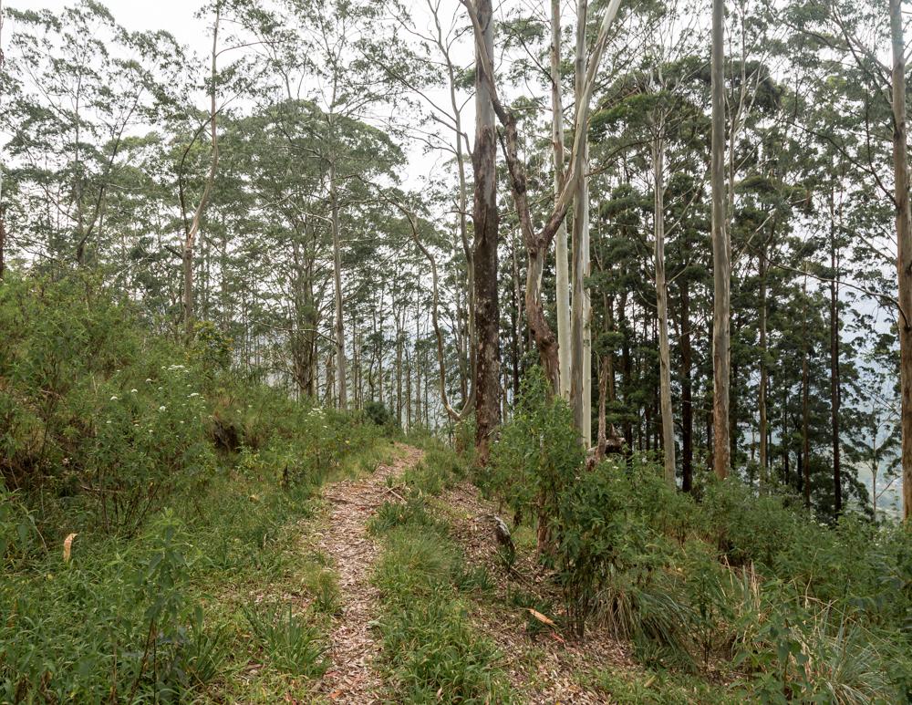 Idalgashinna to Haputale Railway Walk: Tangamale Bird Sanctuary