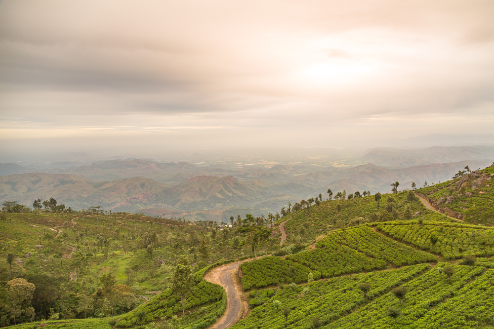 Best things to do in Haputale: Take in the views