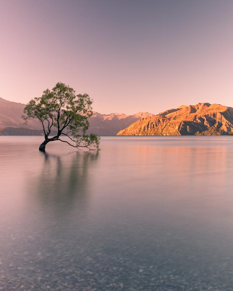 2 week New Zealand South Island Itinerary: That Wanaka Tree