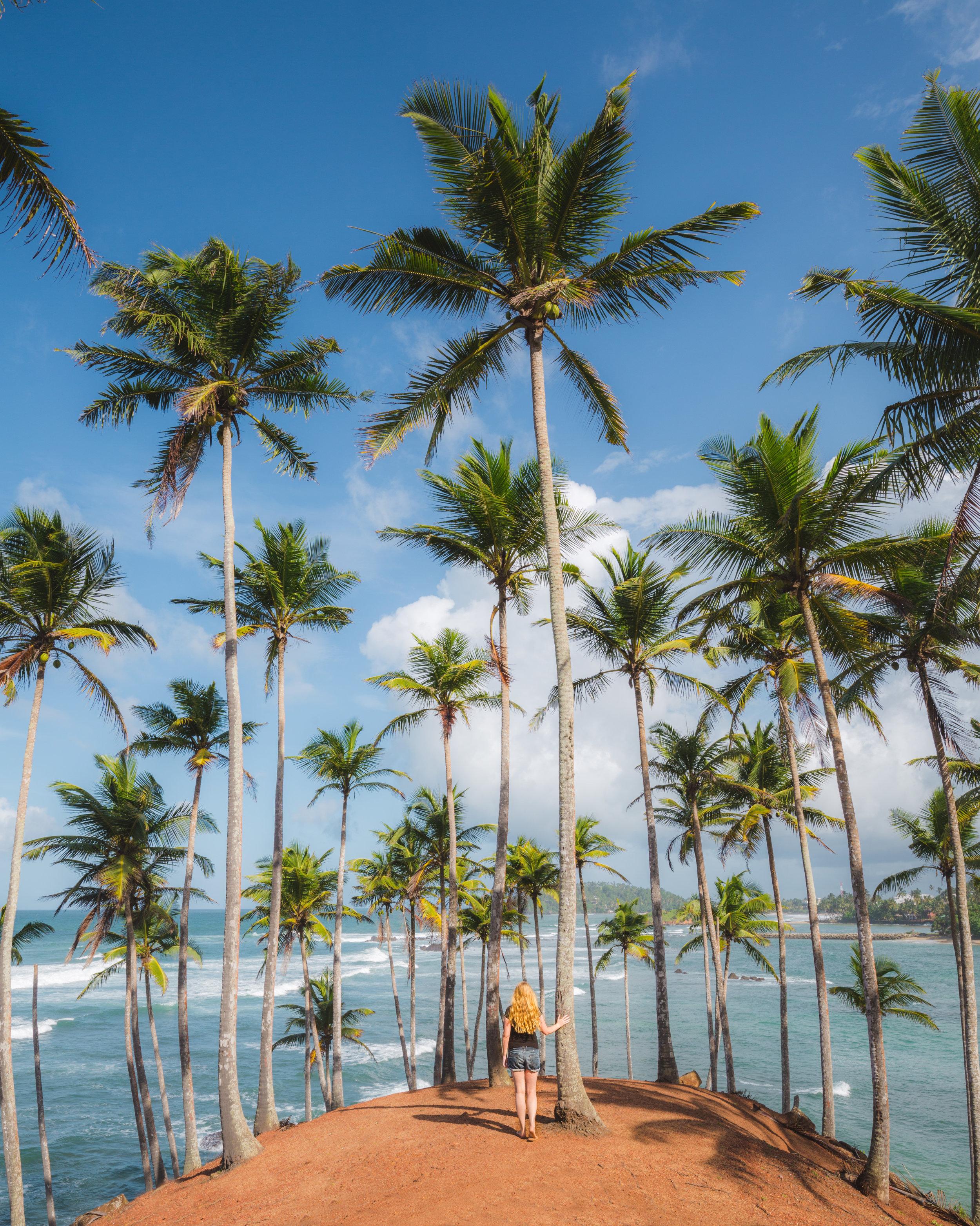 Instagrammable Sri Lanka - Coconut Tree Hill