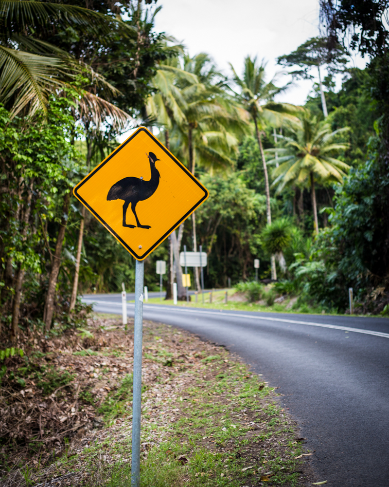 Where to see cassowary - South Mission Beach Roads