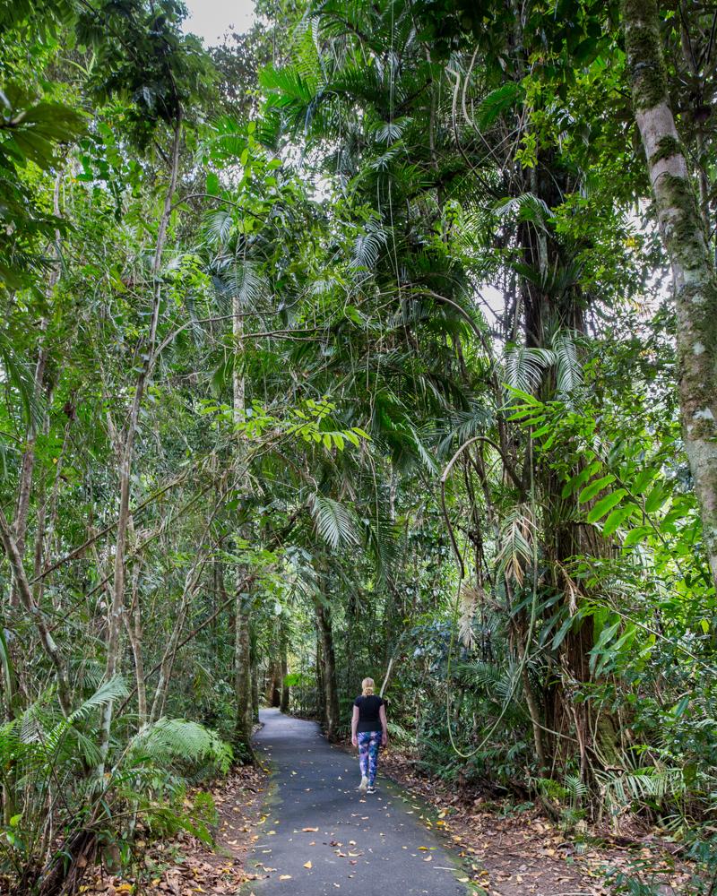 Where to see a wild cassowary - Licuala Fan Palm Walk