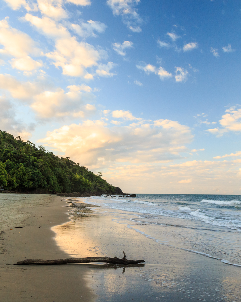 Where to see cassowaries in the wild - Etty Bay