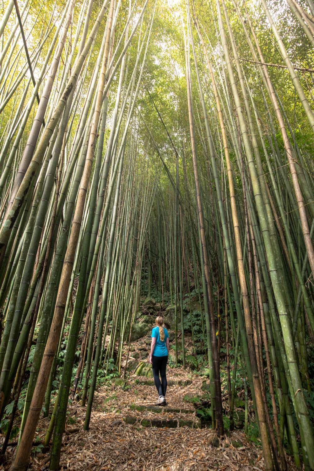 Fenrui Bamboo forests