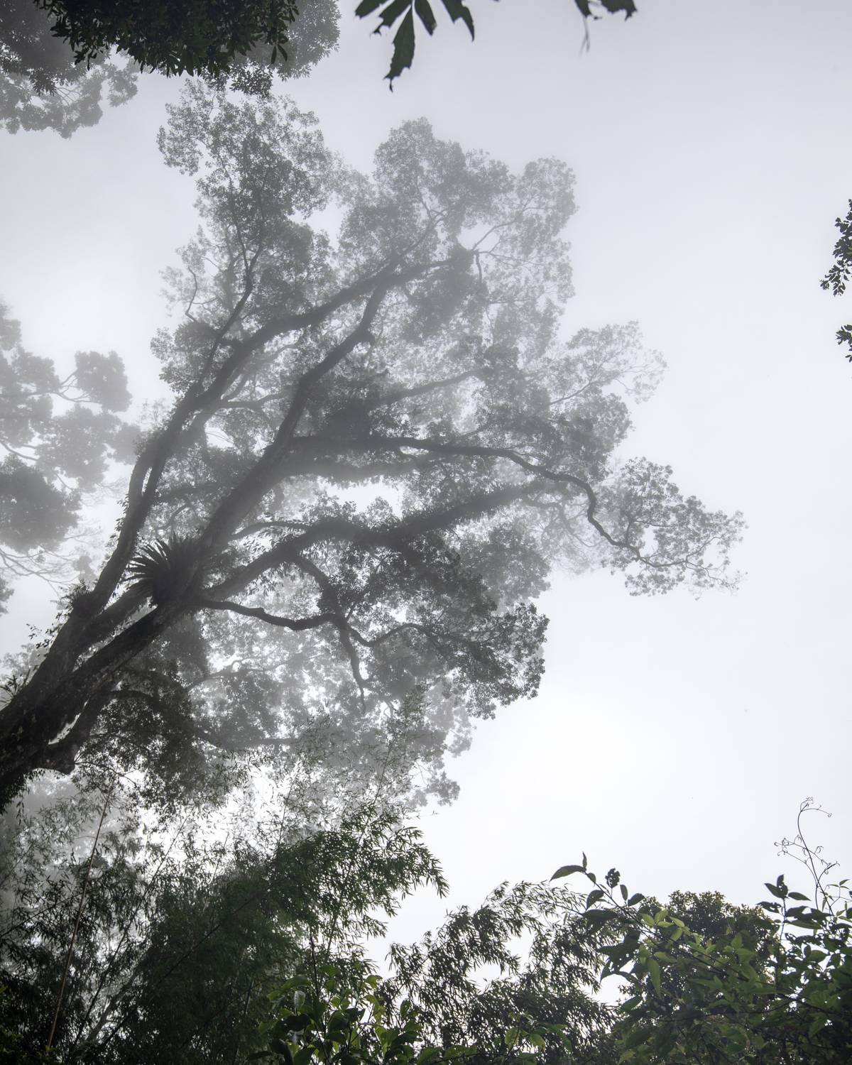 The mist of the forest in Fenchihu
