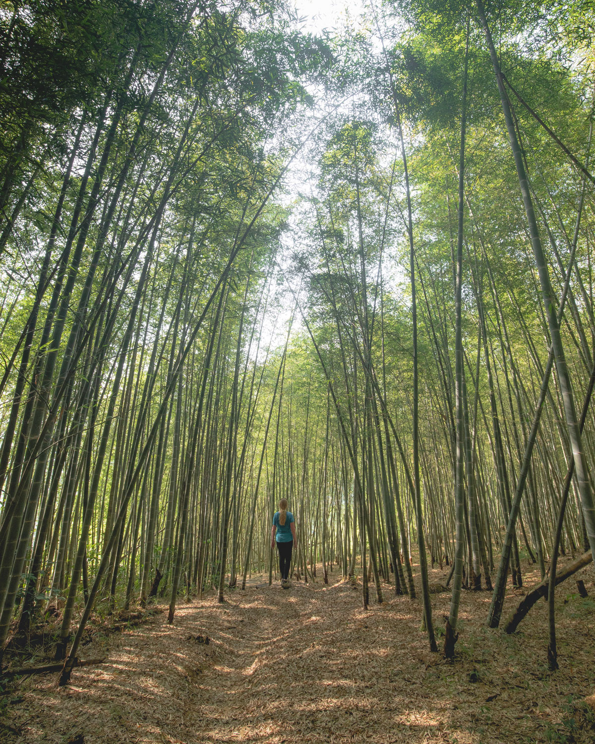 The Bamboo forests near Ruelli