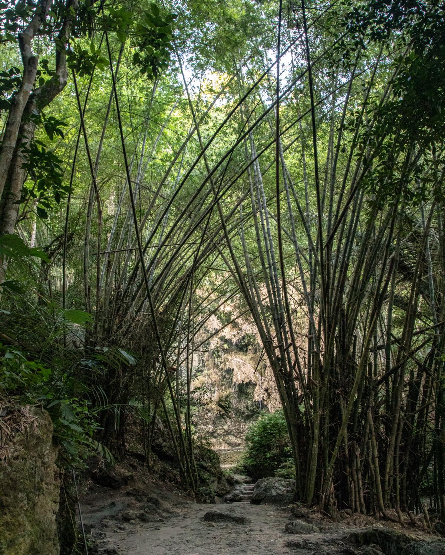 The journey to Tumalog Falls - Cebu