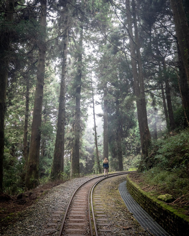 Shuishan Giant Tree Trail - Alishan in Taiwan