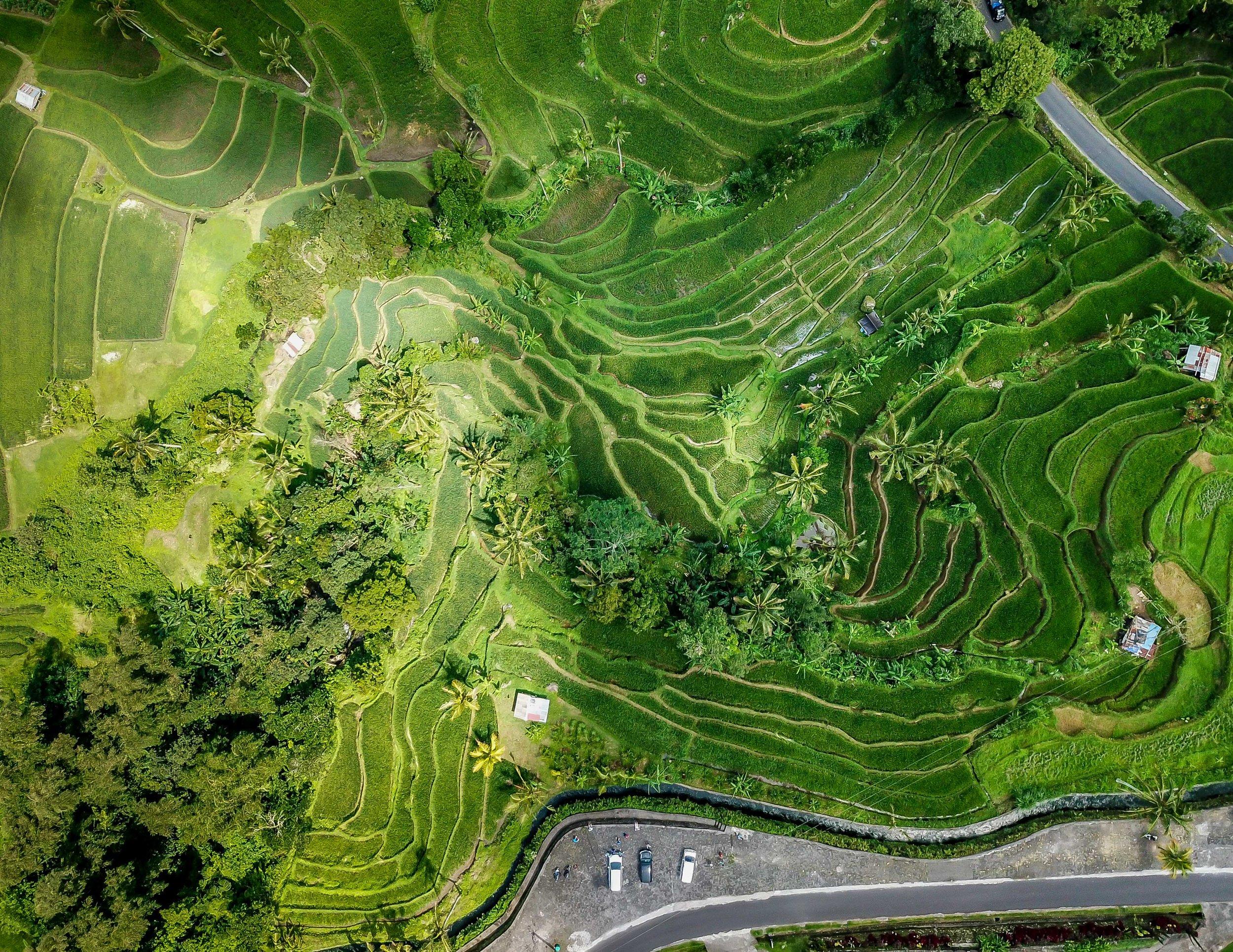 The rice terraces at Jatiluwih in Bali.
