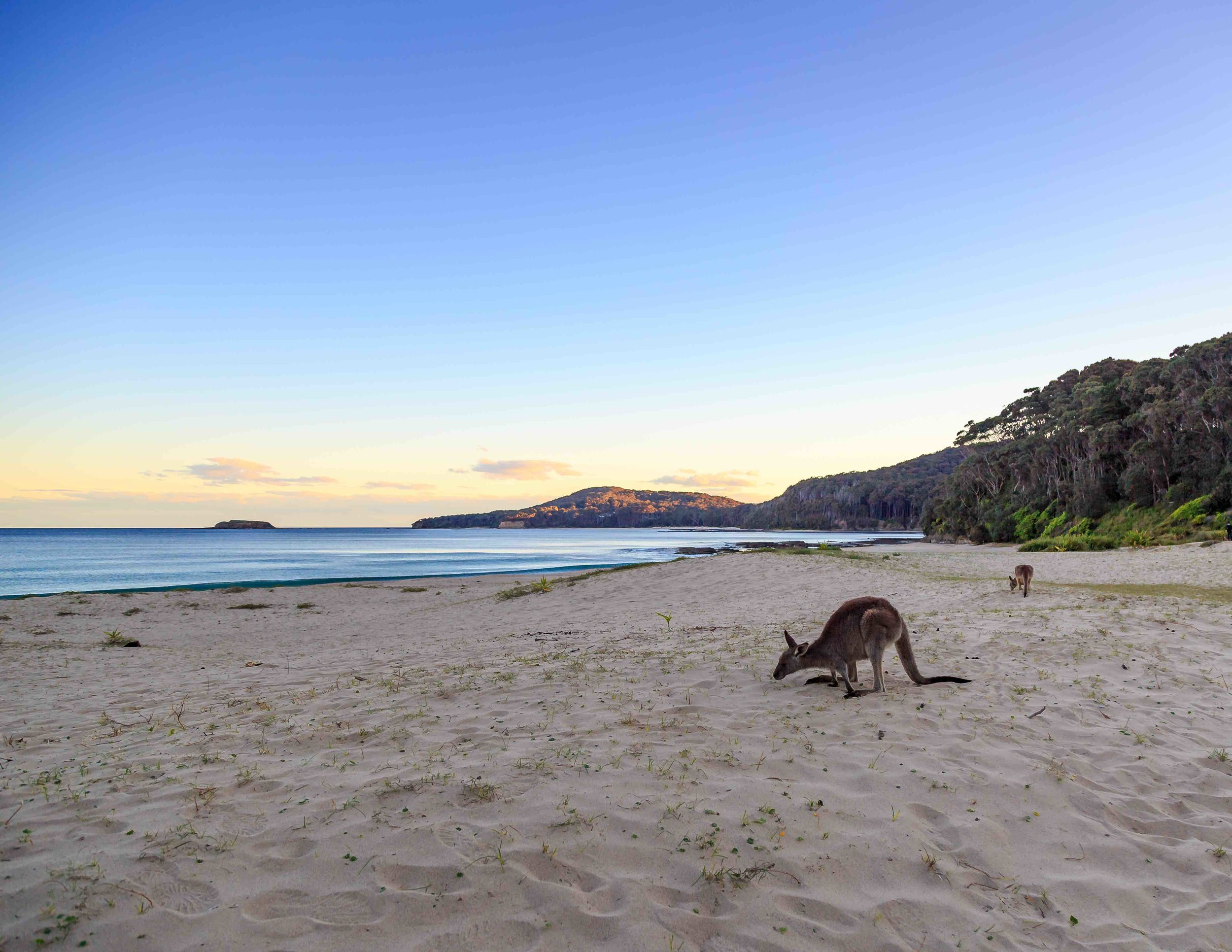Bawley Point, best Places to see wild kangaroos near Sydney