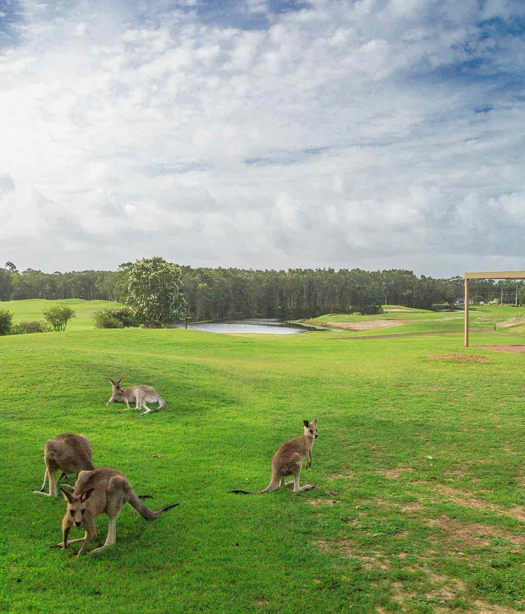 Port Stephens, best places to see wild kangaroos close to Sydney