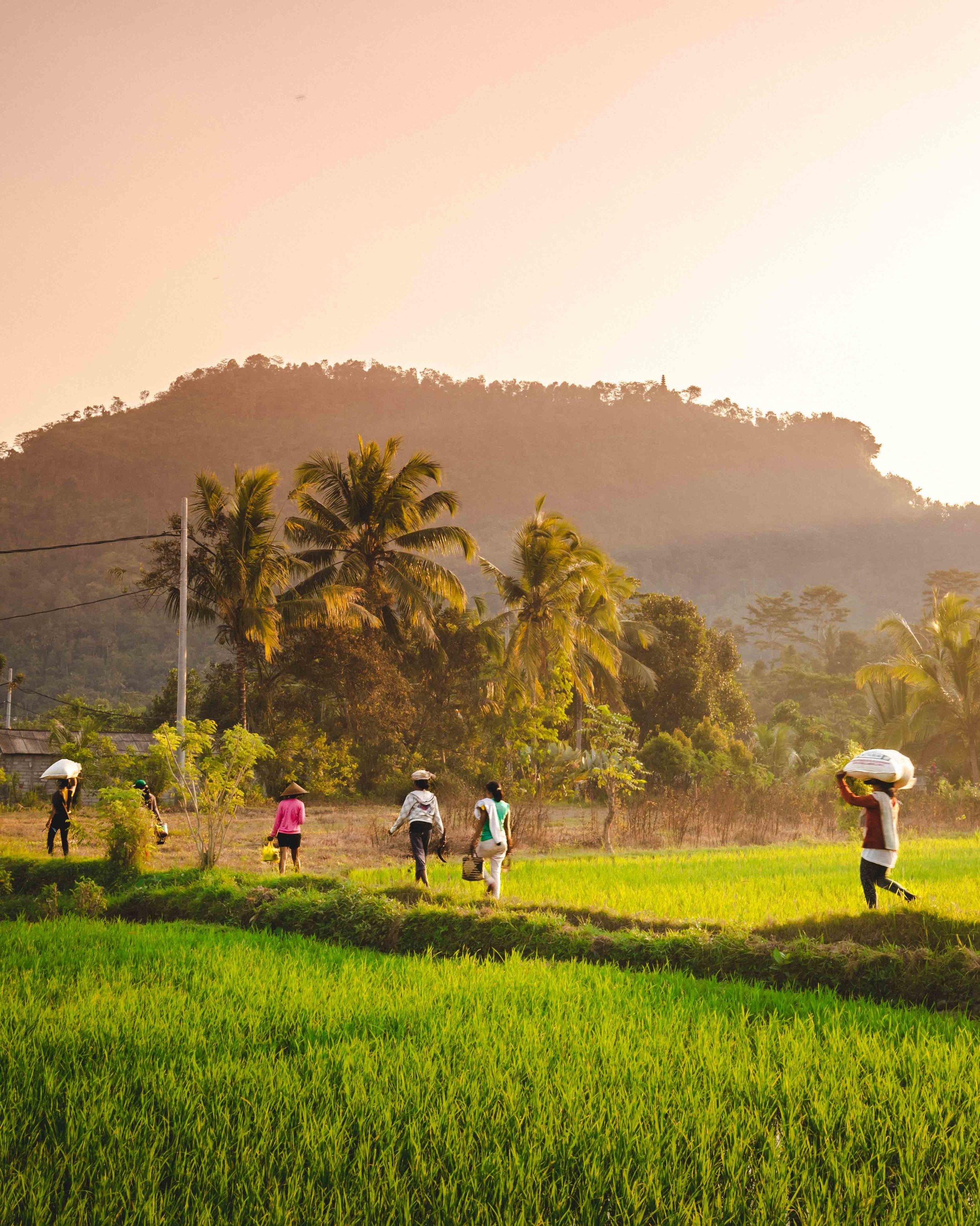 Sidemen Bali - exploring the rice terraces