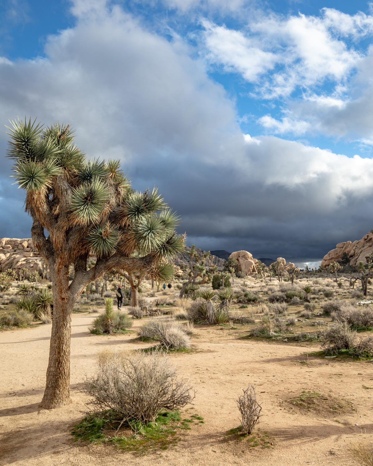 Joshua Tree National Park - How to travel america for $50 a day