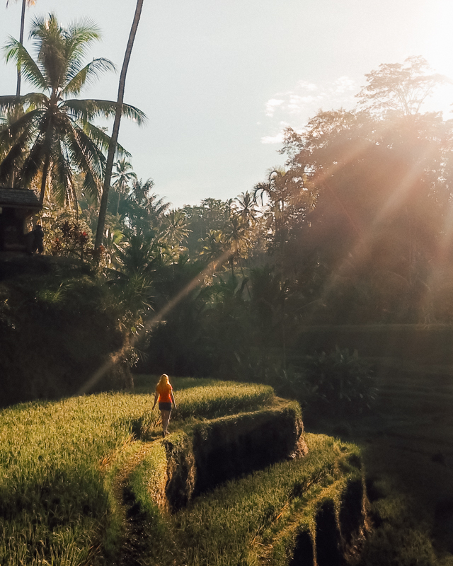 Most Instagrammable spots in Bali: Tegalalang Rice Terrace