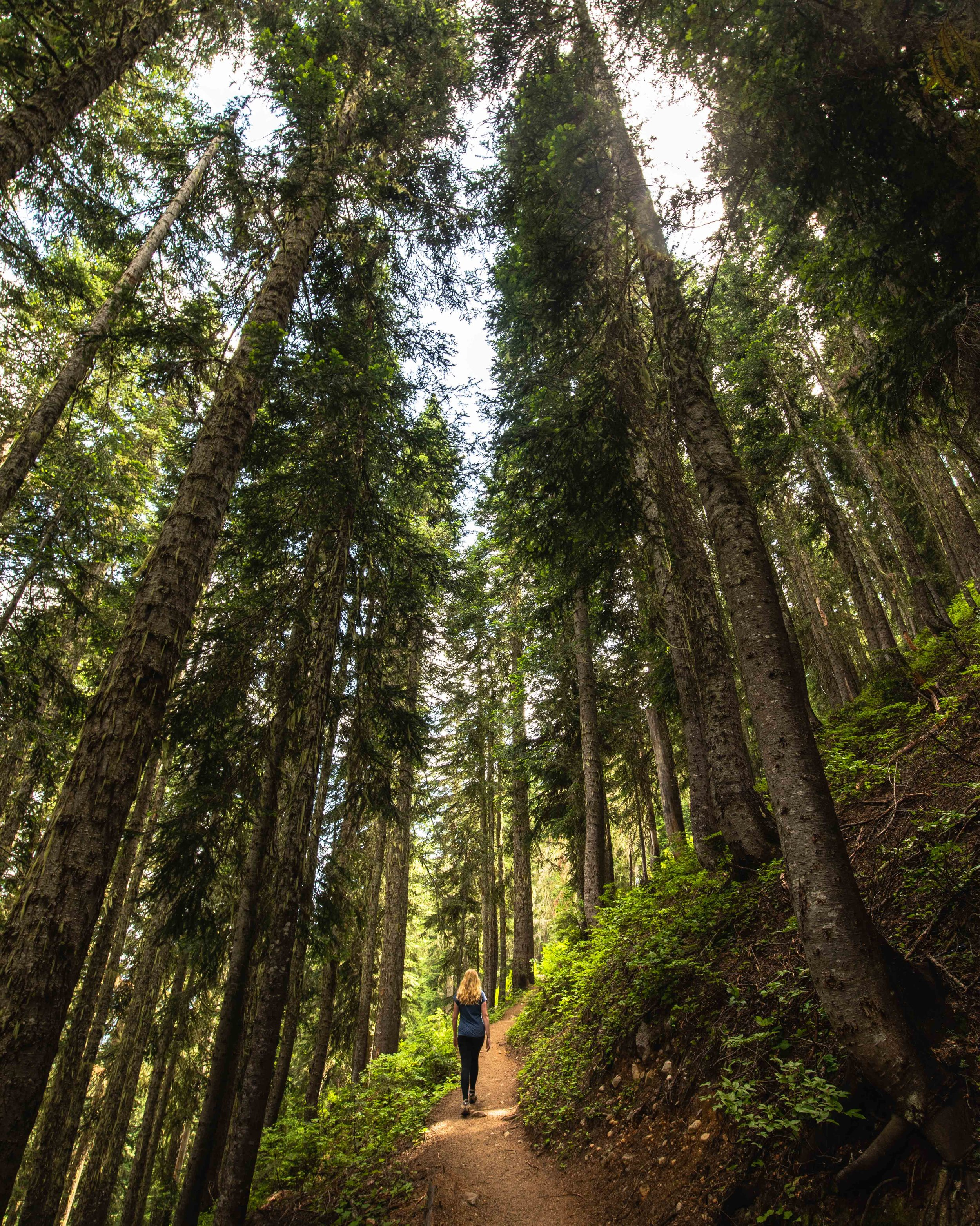 The start of the Maple Pass Loop - North Cascades National Park