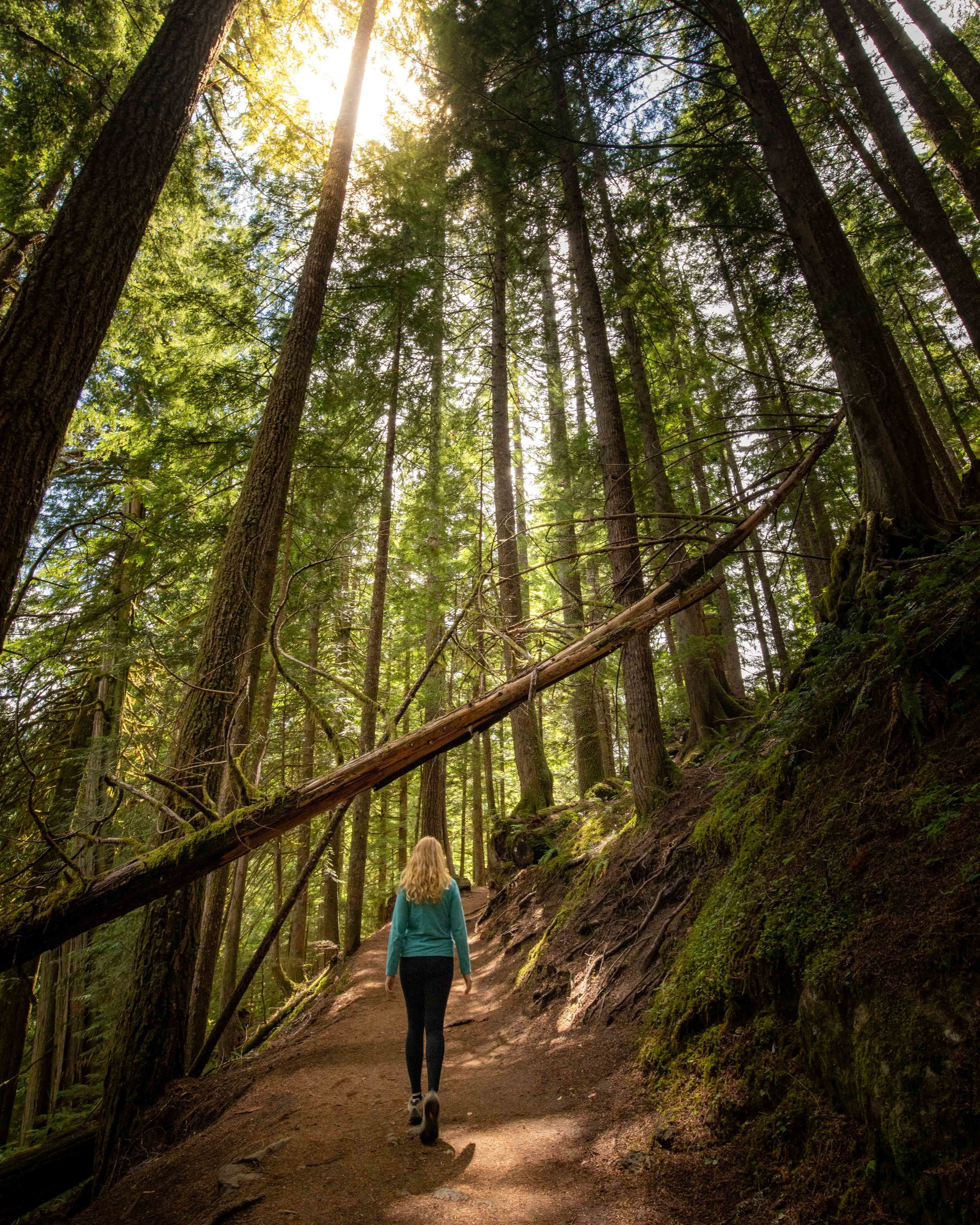Hiking the Grove Of The Patriarchs in Mount Rainier National Park