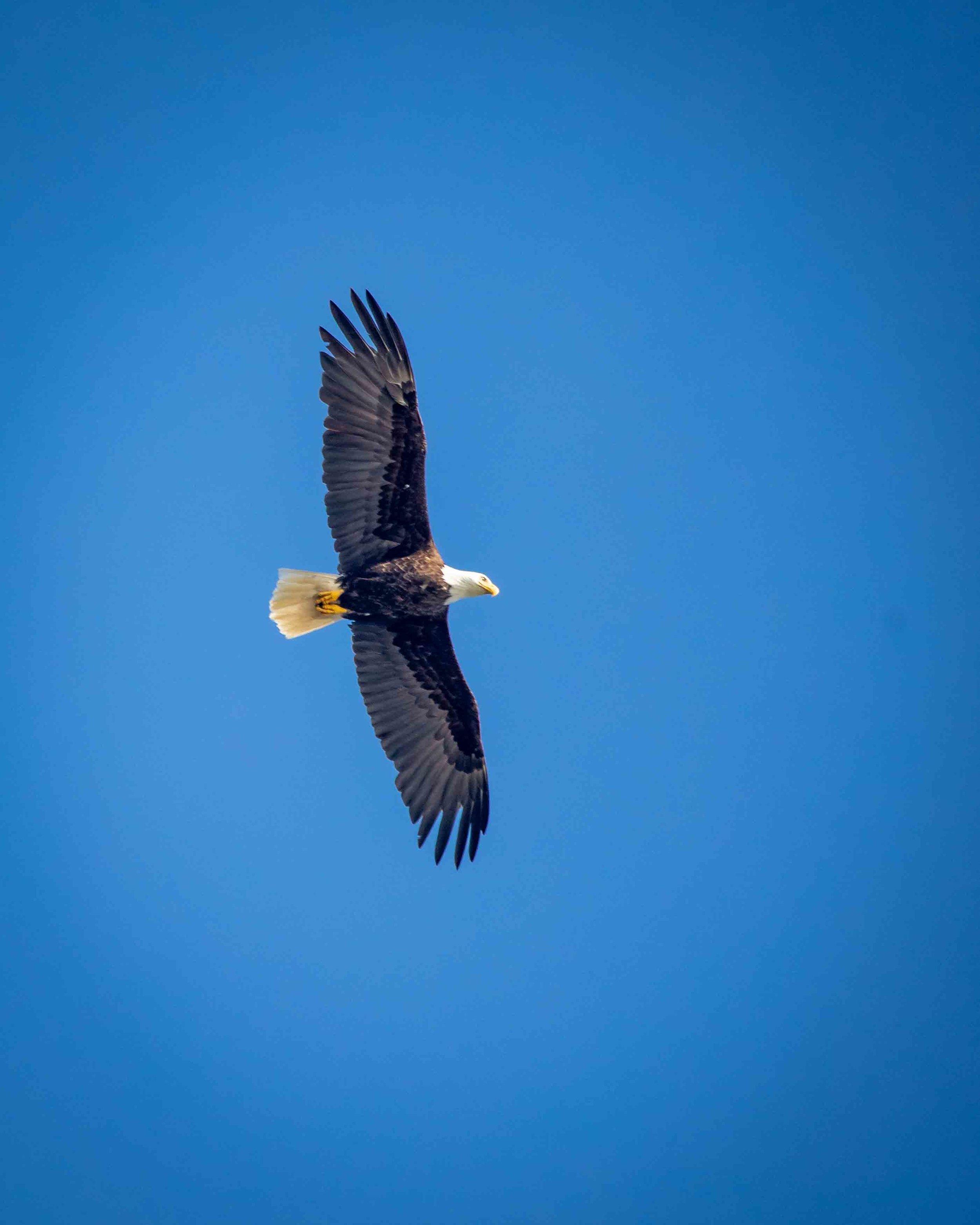 Bald Eagles at Rialto Beach - Olympic National Park Hikes