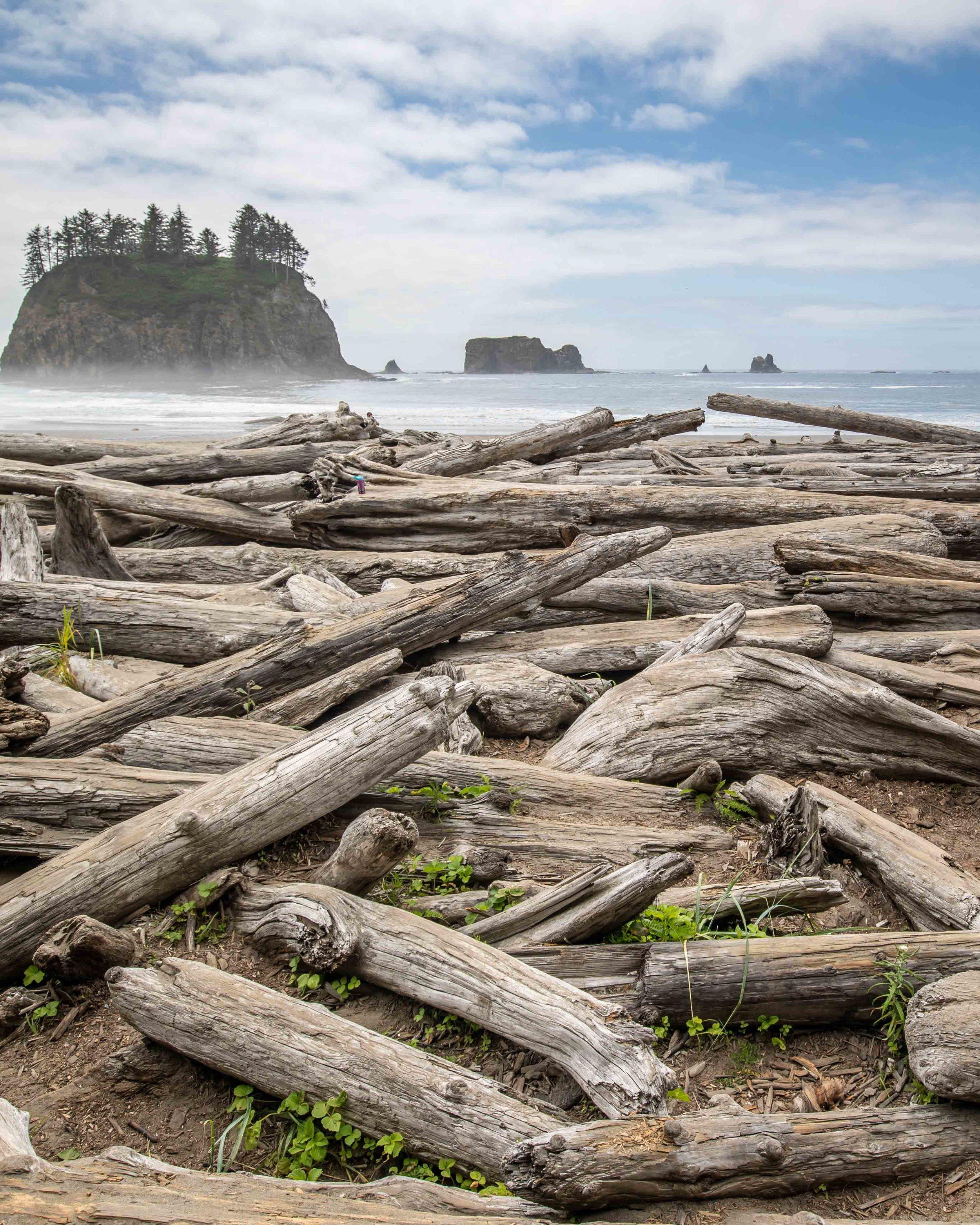 Driftwood at Second Beach