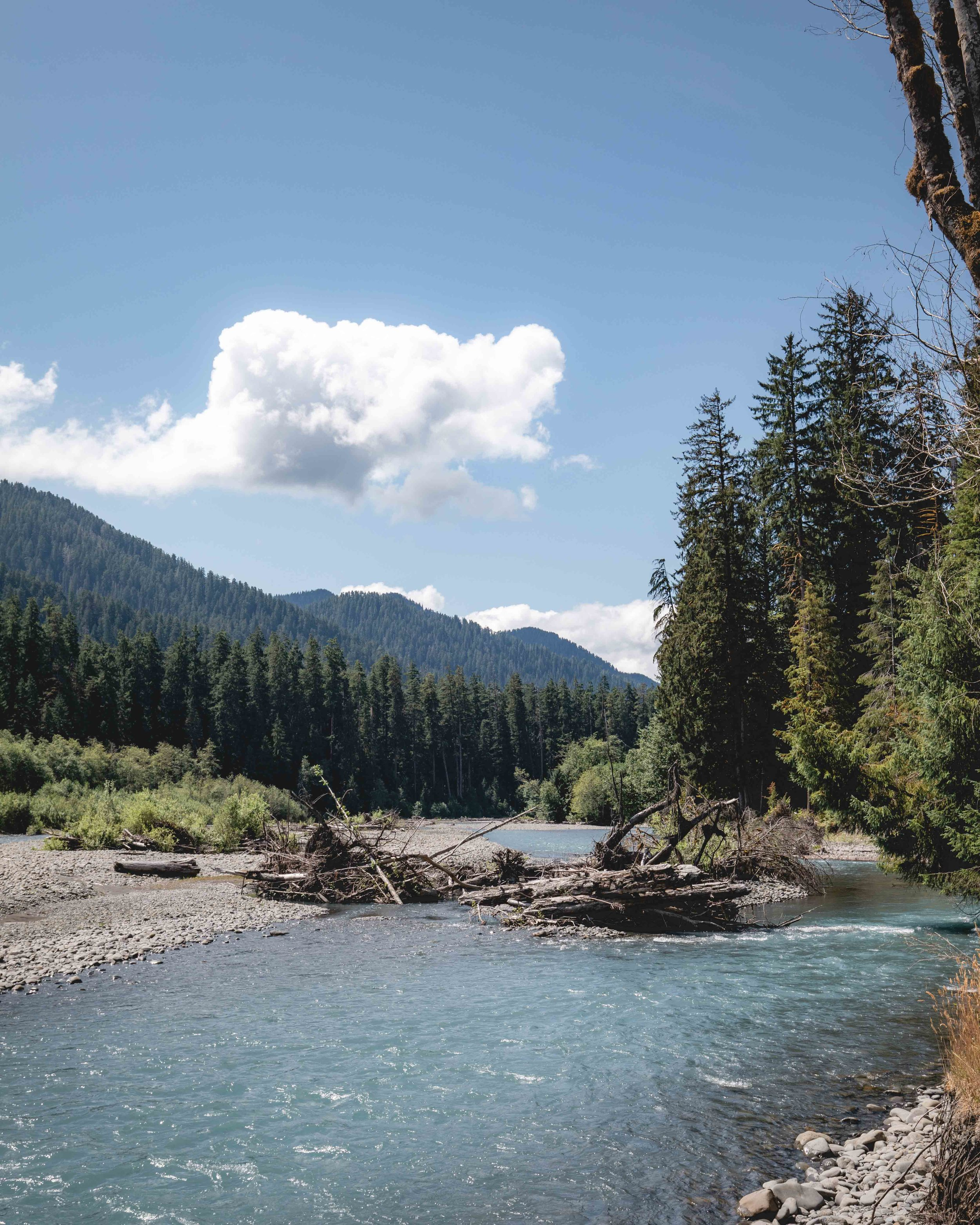 Hoh River in Olympic