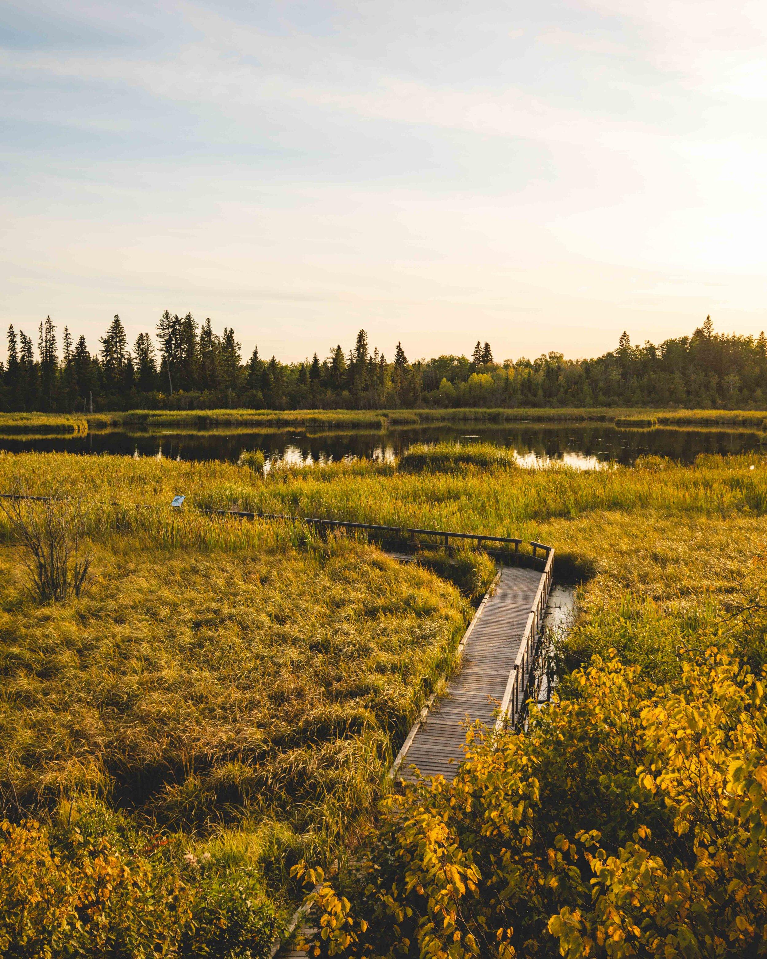 The boardwalk at Ominik Marsh - Riding Mountain National Park hikes