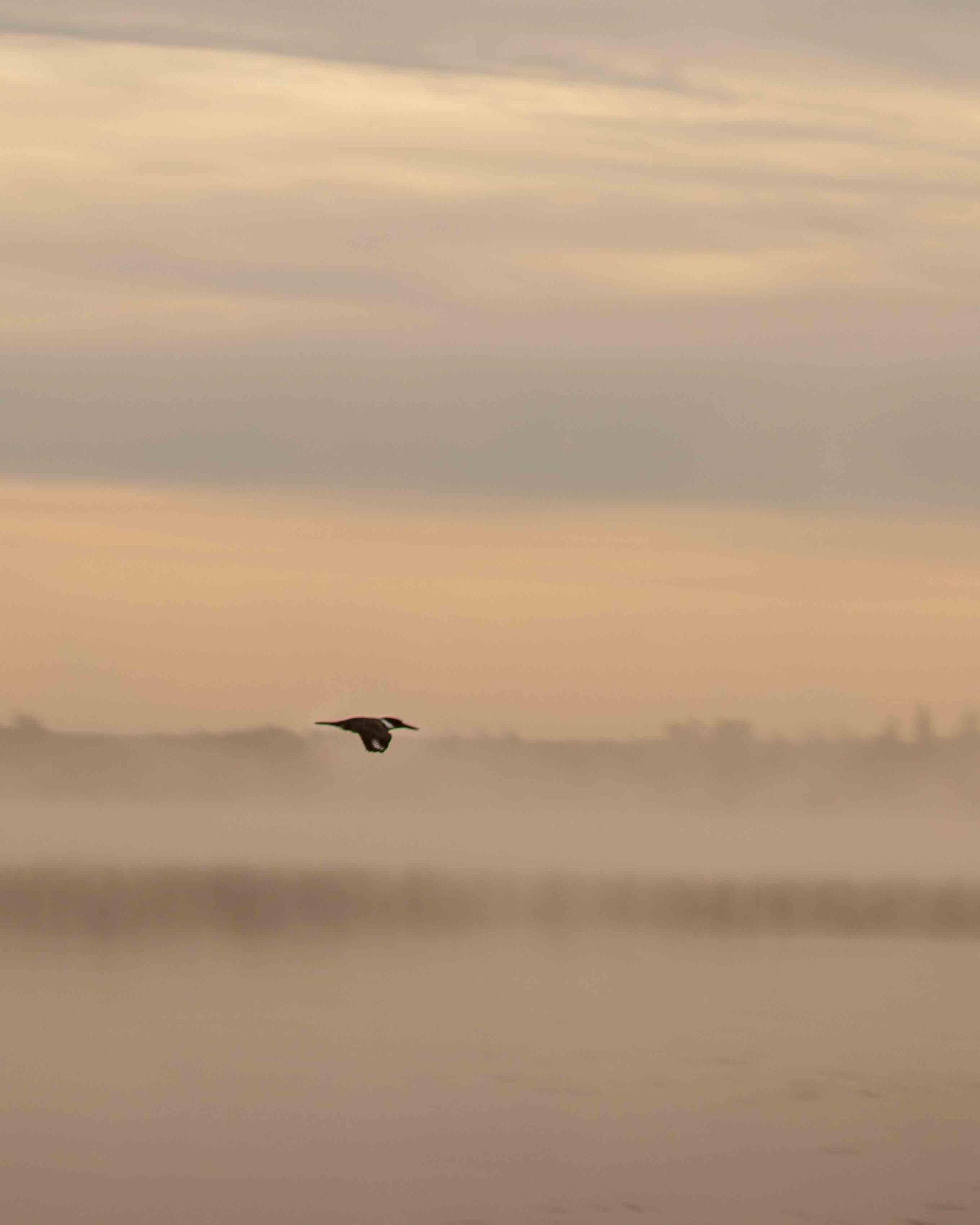 Kingfisher at Lake Audy Dam