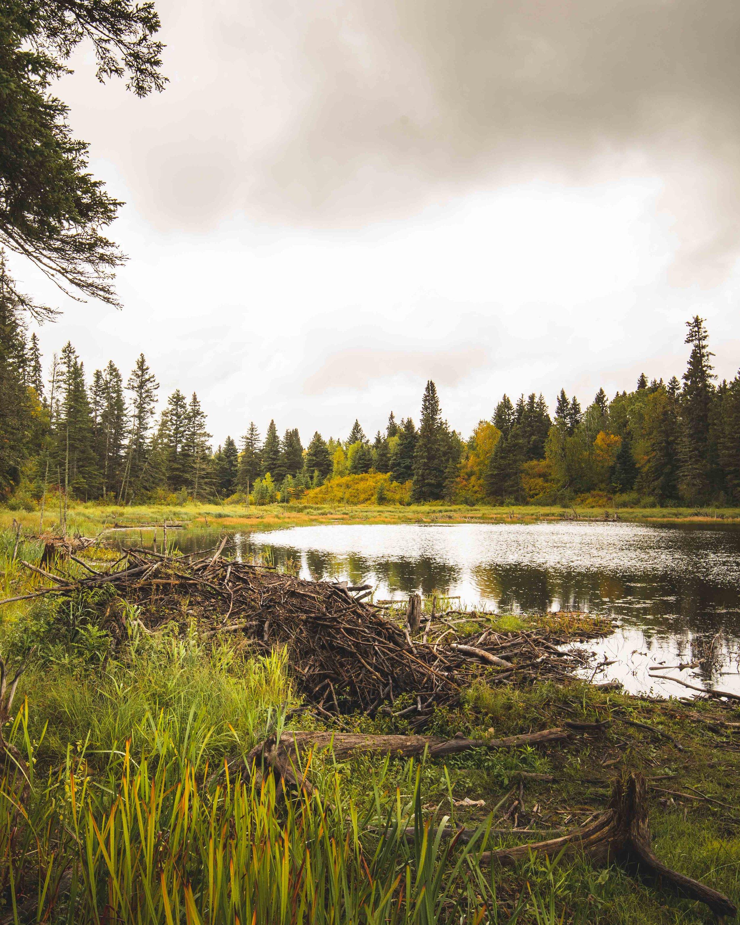 The Beaver Lodge at Bead Lake