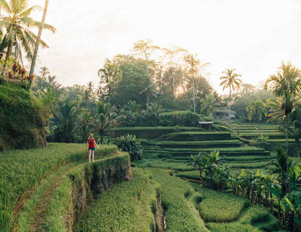 Tegalalang Rice Terrace, Ubud: The famous sunrise spot