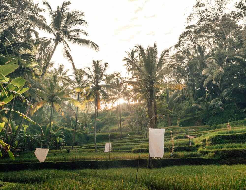 Tegalalang Rice Terrace, Ubud: the best rice terrace near Ubud