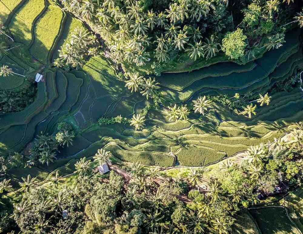 Tegalalang Rice Terrace, Ubud: the view from above