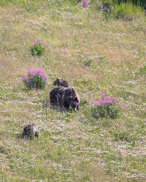 Bear Spray - mistakes to avoid in Banff